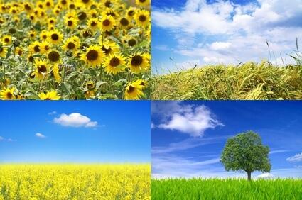 Bioenergie – Energie aus Biomasse