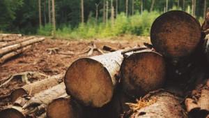 Holzbedarf bei Möbeln