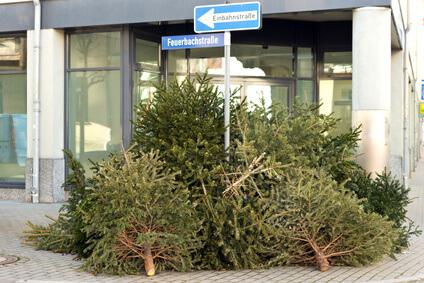 Energielieferant Weihnachtsbaum